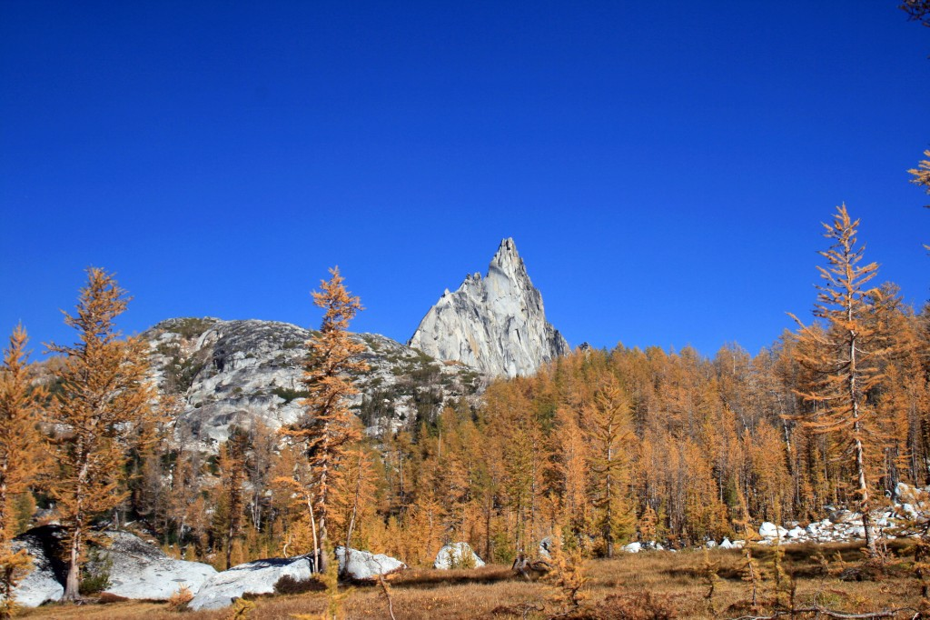 Prusik Peak Larches