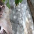 monkey_header