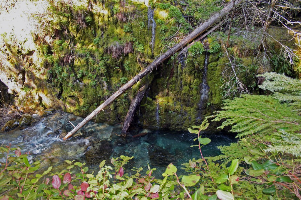 opal creek above opal pool