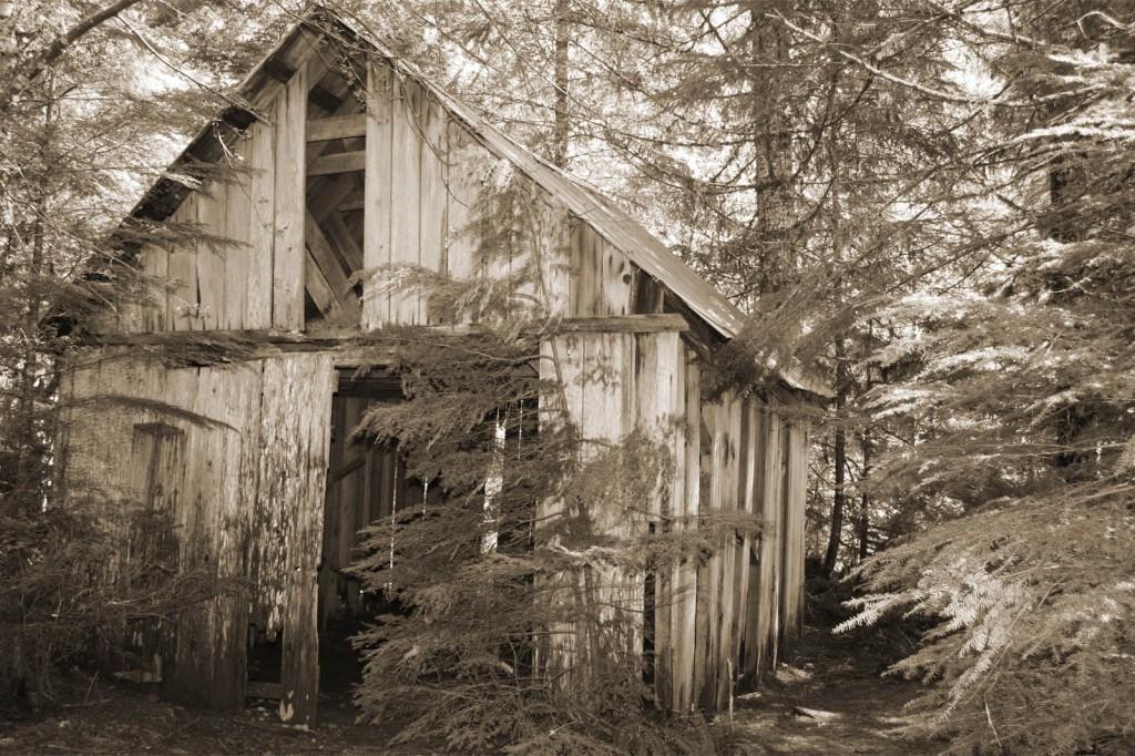 opal creek sawmill