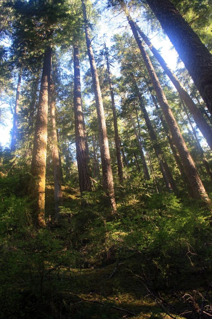 Opal Creek trees