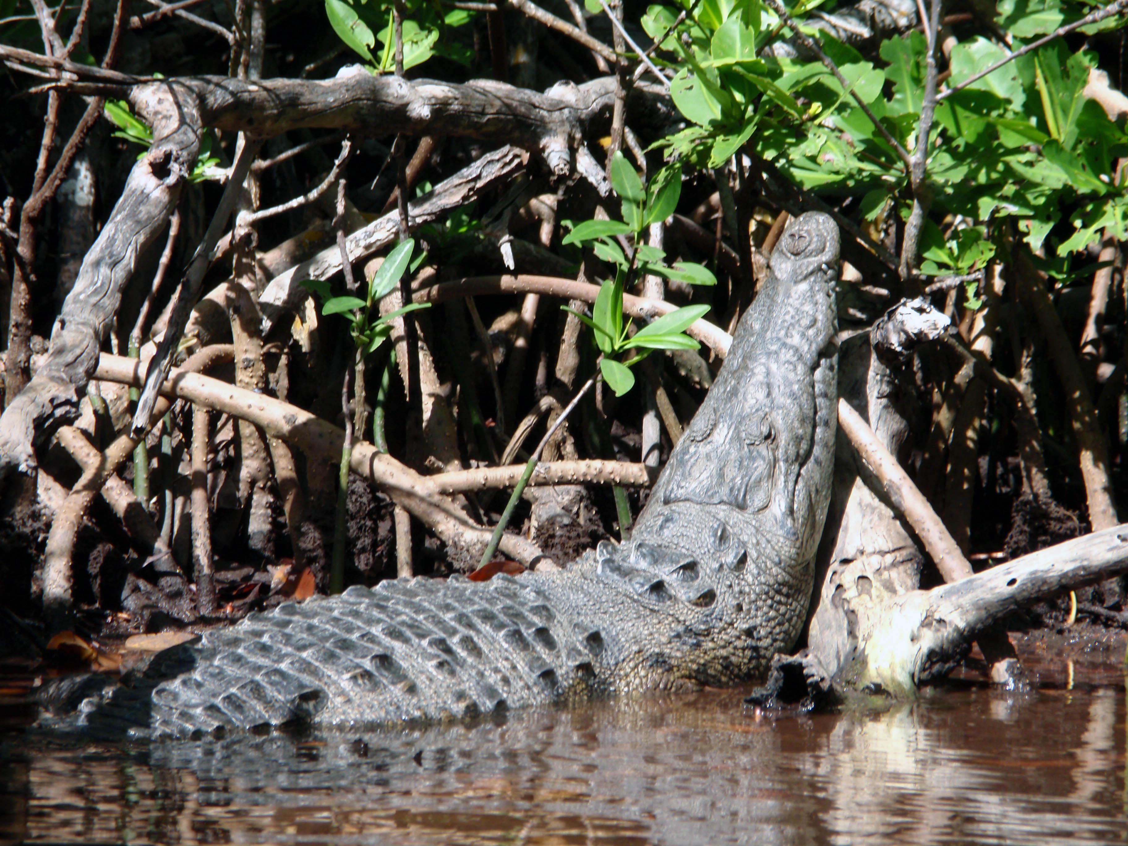 Crocodile Sian Kaan Biosphere