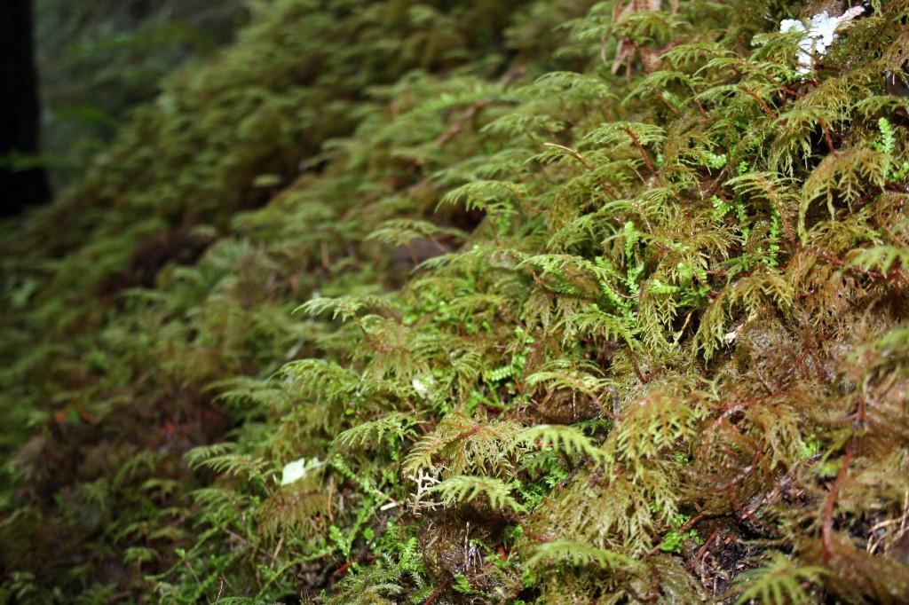 eagle creek ferns