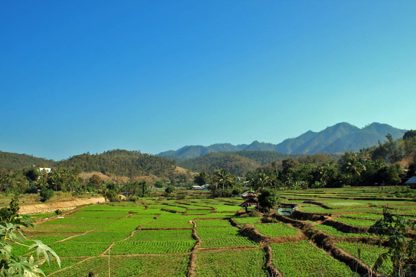 mae hong son loop paddy