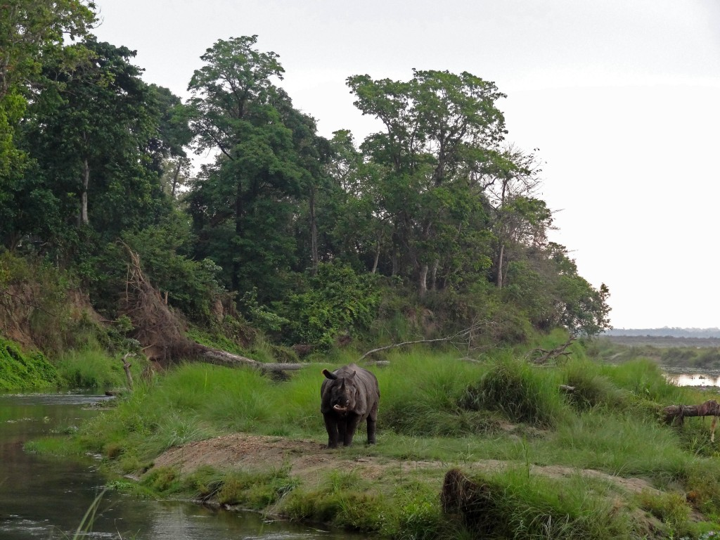 Rhino at Chitwan National Park, Nepal