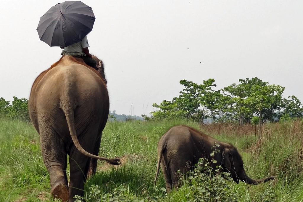Chitwan Safari Elephants