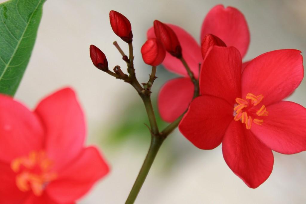 Raja Ampat Arborek Flowers