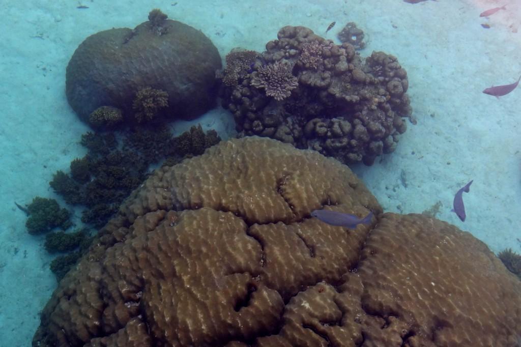 Raja Ampat Wayag Coral