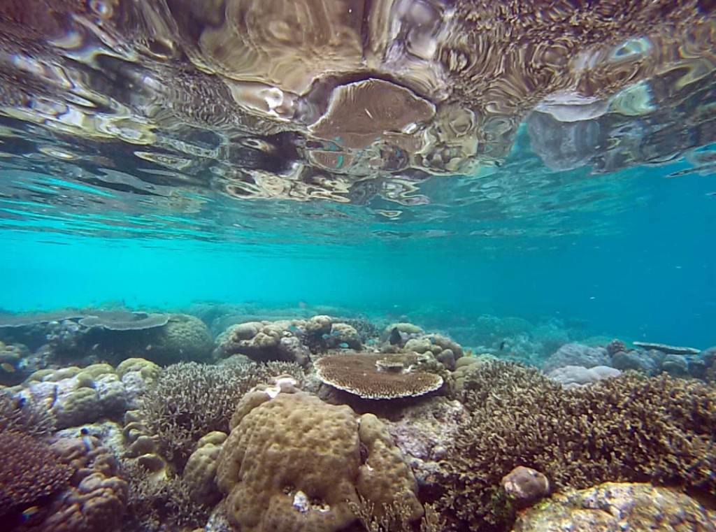 Shallow water snorkeling