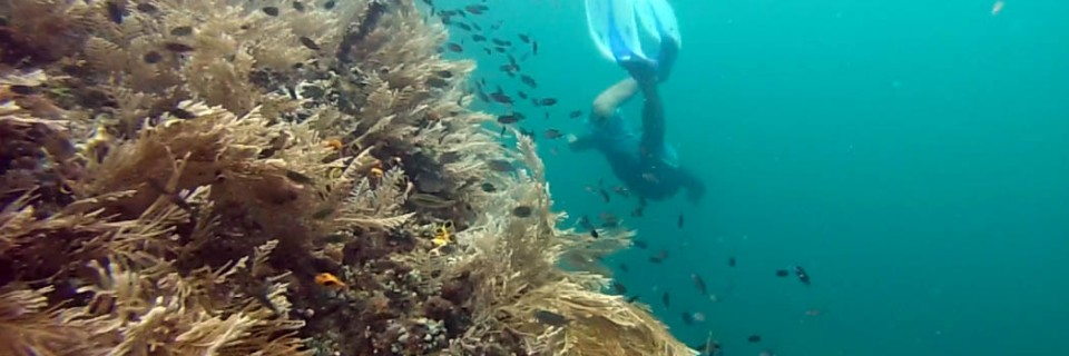 Free-diving Raja Ampat