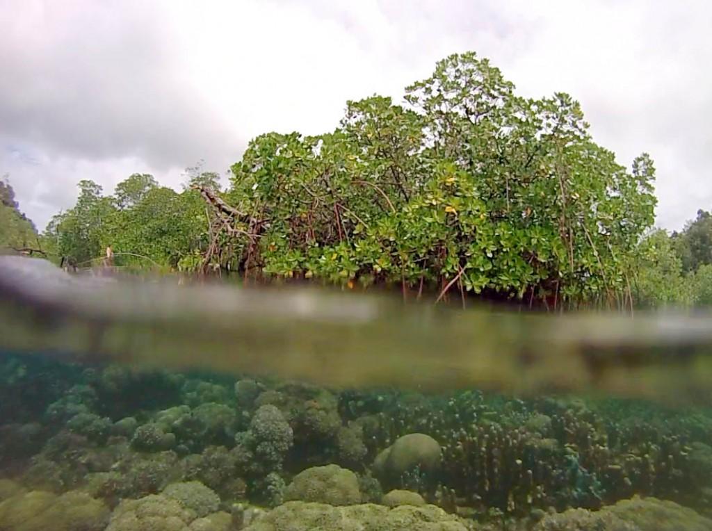 Mangrove snorkeling in Raja Ampat