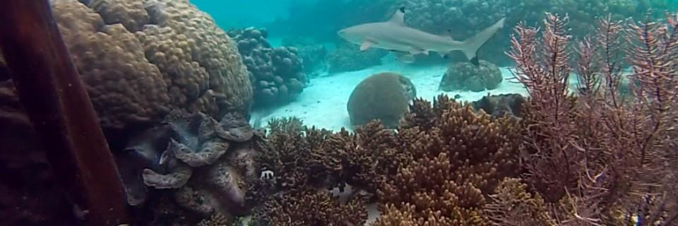 Raja Ampat snorkeling with sharks at Wayag
