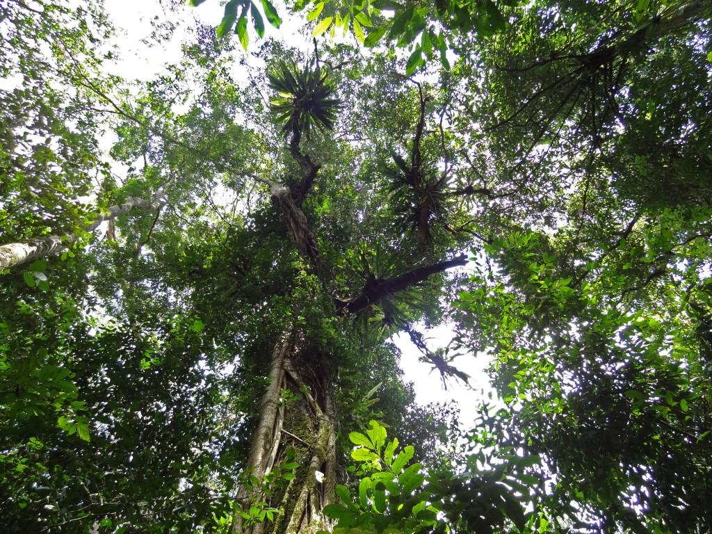 Malaysia, Gunung Mulu Canopy