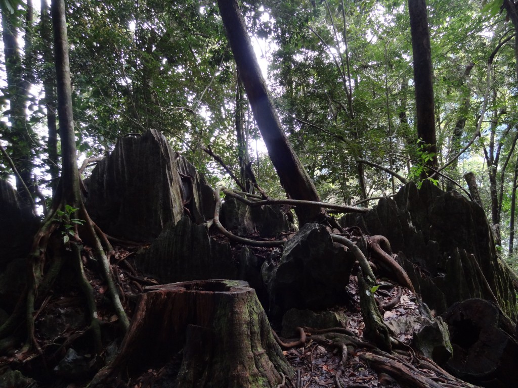 Malaysia, Gunung Mulu Mini Pinnacles