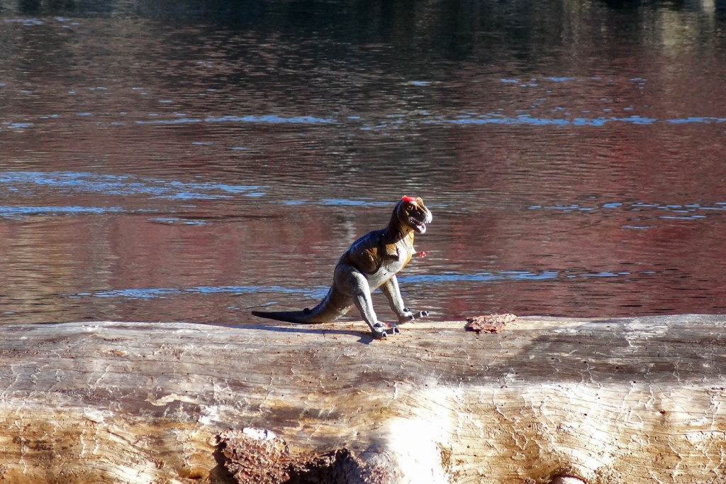 Deschutes River Wildlife