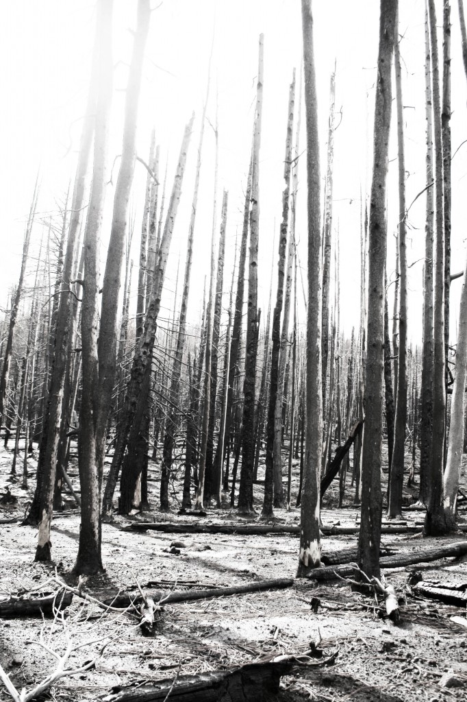 Pole Creek Fire B/W2