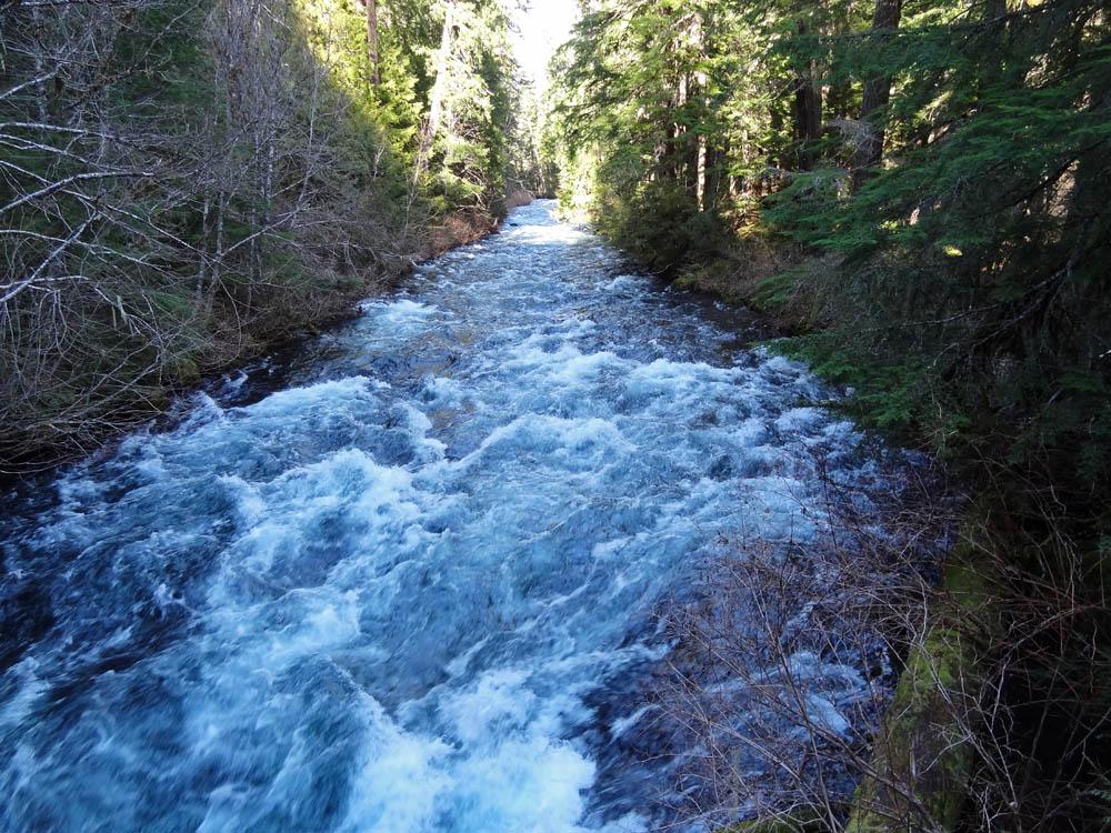 Bridge-mckenzie-river-waterfall-loop-trail