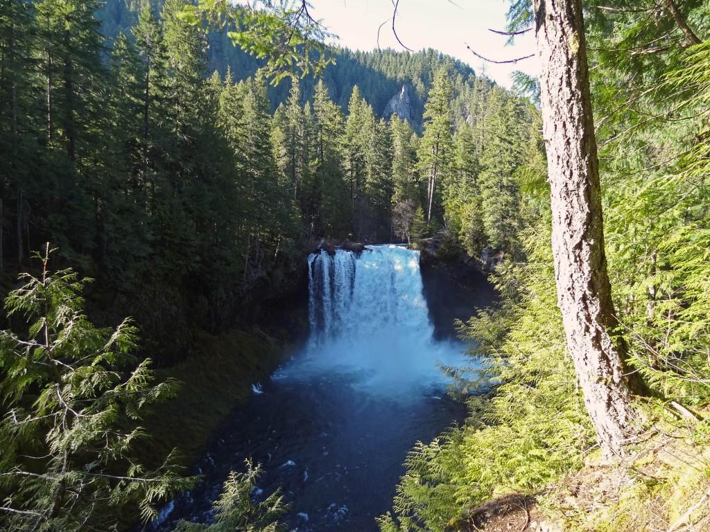 Koosah-falls-mckenzie-river-trail