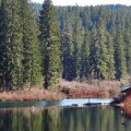 McKenzie_river_clear_lake_header