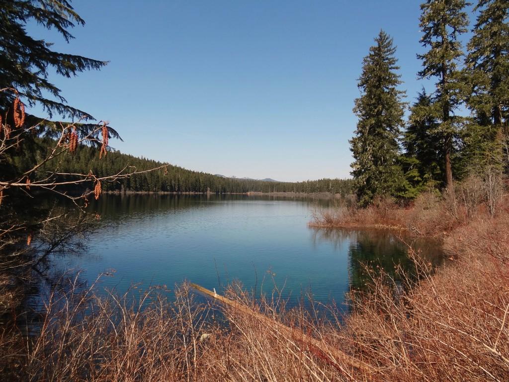 McKenzie_river_trail_clear_lake