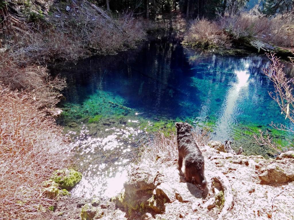 McKenzie_river_trail_clear_lake_pool