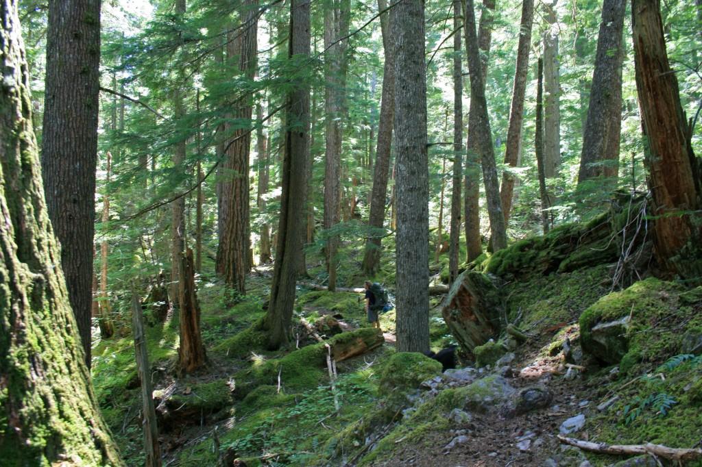Big-slide-lake-forest
