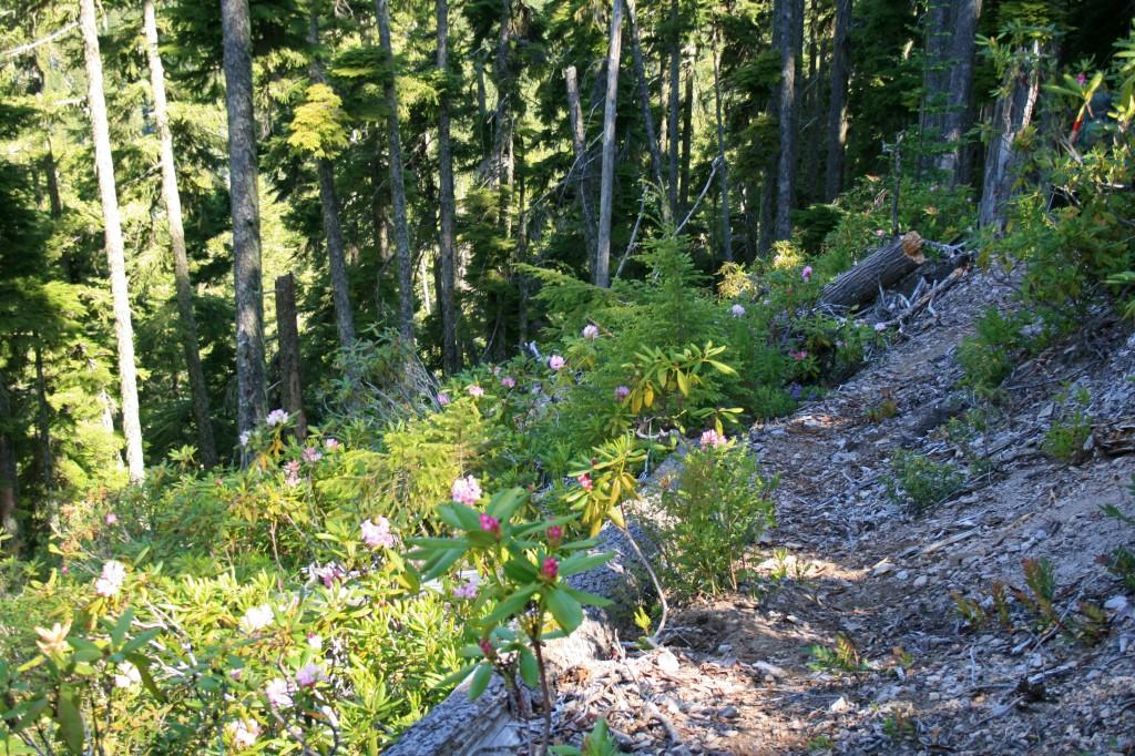 big-slide-lake-rhododendrons