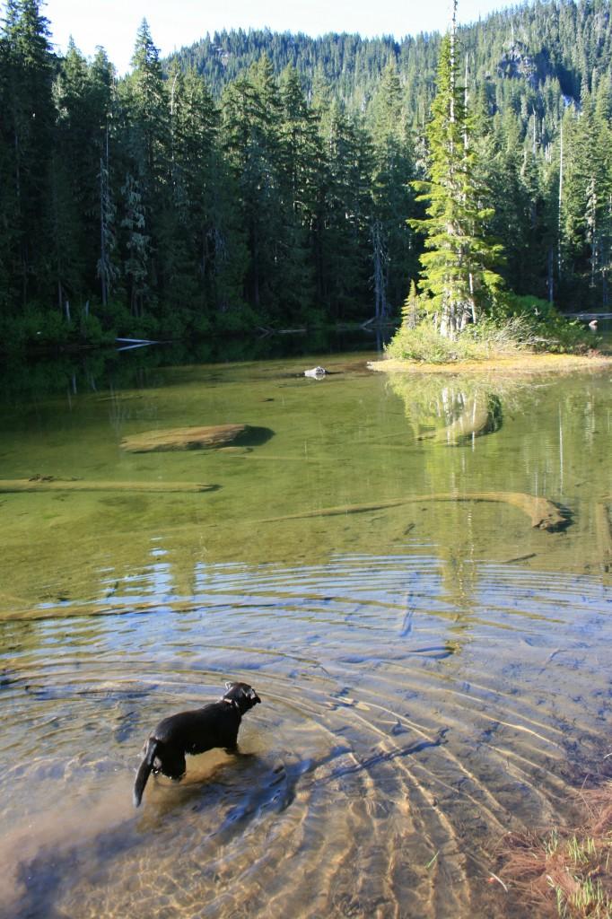 big-slide-lake-sal-morning-swim