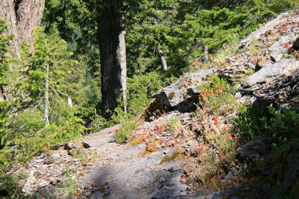 big-slide-lake-trail-indian-paintbrush